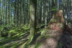 Día soleado en un bosque denso, verde, subtropical, con el árbol cubierto de musgo Fotos de archivo libres de regalías