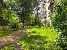 Día soleado en una yarda residencial de la ciudad Los conos del pino bajaron a la tierra de un árbol de pino fotografía de archivo libre de regalías