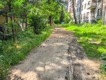 Día soleado en una yarda residencial de la ciudad Los conos del pino bajaron a la tierra de un árbol de pino imagen de archivo libre de regalías