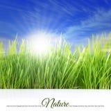 Día soleado feliz con la hierba Foto de archivo libre de regalías