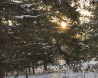 Día soleado nevado de los árboles en parque del invierno Foto de archivo libre de regalías