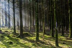 Día soleado que sorprende de invierno con los rayos de sol que vienen a través de los árboles con las sombras y el musgo foto de archivo
