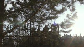 Día soleado, Sun que se rompe a través de tiro del carro de los árboles de pino almacen de metraje de vídeo