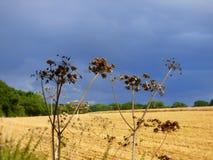 Día tempestuoso en un campo de los granjeros foto de archivo