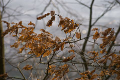 Día ventoso fotografía de archivo libre de regalías
