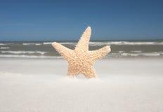 Día ventoso con las estrellas de mar en la playa Fotografía de archivo libre de regalías