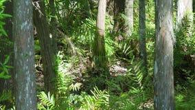 Día ventoso reservado en un bosque de la Florida metrajes