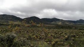 Día ventoso y nublado en el paramo de Purace, Colombia Frailejones en neotropics almacen de video