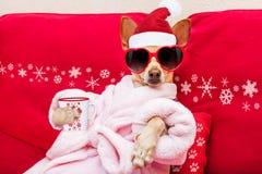 Días de fiesta de la Navidad de la salud del balneario del perro foto de archivo