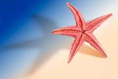 Días de fiesta de las estrellas de mar Fotos de archivo