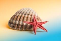 Días de fiesta de las estrellas de mar Imagen de archivo libre de regalías