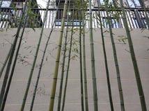 Días de invierno de bambú hermosos del fondo fotografía de archivo libre de regalías