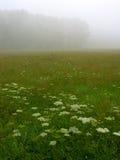 Días de la niebla Fotos de archivo libres de regalías