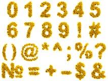 Dígitos amarelos do dente-de-leão, isolados no branco fotos de stock royalty free