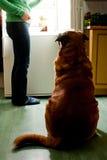 Dîner de chien photographie stock