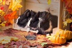 Dîner végétarien avec la famille des lapins Photo stock