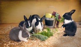 Dîner végétarien avec la famille des lapins Image libre de droits