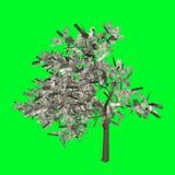Dólar americano del árbol del dinero stock de ilustración