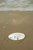 Dólar de areia na costa fotos de stock