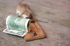 Dólar e rato prendidos Fotografia de Stock