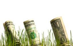 Dólar en hierba Imagen de archivo libre de regalías