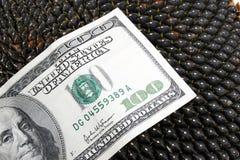 Dólar en los gérmenes de girasol de un girasol Imágenes de archivo libres de regalías