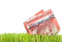 Dólares canadienses en hierba Imagenes de archivo