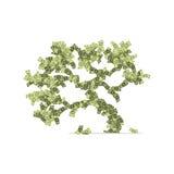 Dólares de árbol Imágenes de archivo libres de regalías