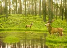 Dólares de los ciervos en el terciopelo del verano que se coloca en una abertura en bosque Foto de archivo