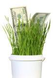 Dólares en hierba Imágenes de archivo libres de regalías
