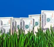 Dólares na grama Imagens de Stock