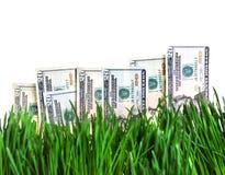 Dólares na grama Fotos de Stock Royalty Free