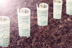 Dólares que crescem fora da terra O conceito do lucro, crescimento, renda, investimento rentável Fotos de Stock