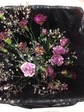 Dö blommor i ett racka ner påfack Royaltyfri Foto