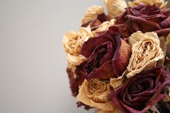 Dö rosor Royaltyfria Foton