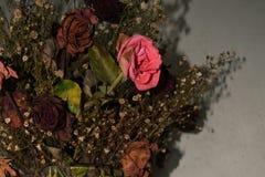 Dö rosor Arkivbilder