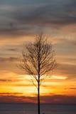 Dö trädet i solnedgången, soluppgångbakgrund Fotografering för Bildbyråer