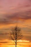 Dö trädet i solnedgången, soluppgångbakgrund Royaltyfri Bild
