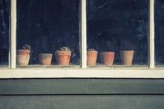 Dö växter på krukor i fönster av retro utgjutit lägga in för gammal tappning Royaltyfri Bild