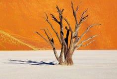 död ökennamibnamibia tree Arkivfoto