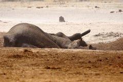 Död afrikansk elefant i en waterhole Arkivbild