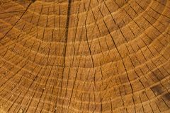 Död av ett gammalt träd Texturen av trädet i stubben arkivfoto