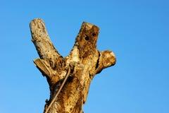 Död blå himmel för trädstam Royaltyfri Foto