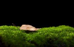 Död blad- och regndroppe Arkivbilder