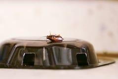 död blockering för kackerlacka Royaltyfri Bild