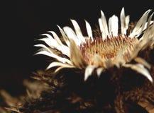 död blomma Arkivbilder