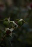 Död blomma för blommabakgrund Arkivfoto