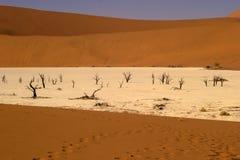 död dal 3 Arkivbild