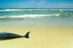 död delfin Arkivfoto