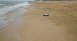 Död delfin vid havet arkivfilmer